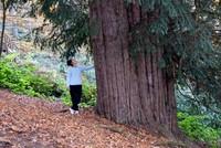 بعمر يتجاوز الأربع آلاف عام.. خامس أقدم شجرة في العالم ترحب بزوارها
