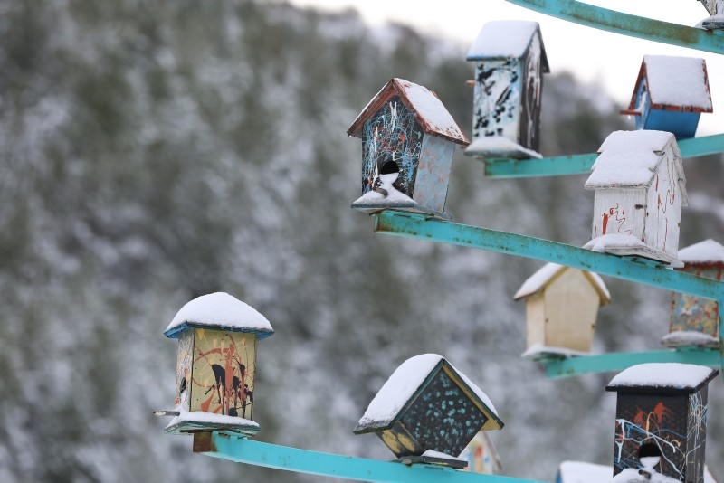 Winter beauties in Turkey's first fauna display area