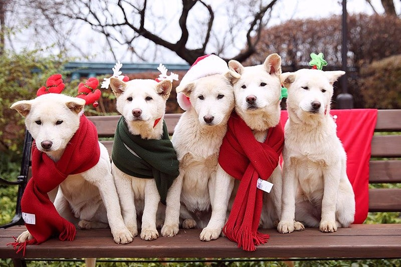 South Korea's former president Park Geun-hye's pet dogs are seen in this handout picture provided by the Presidential Blue House and released by News1. (Reuters File Photo)