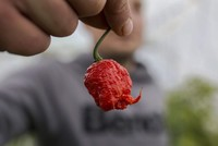 Can spicy food reduce the risk of heart attacks?