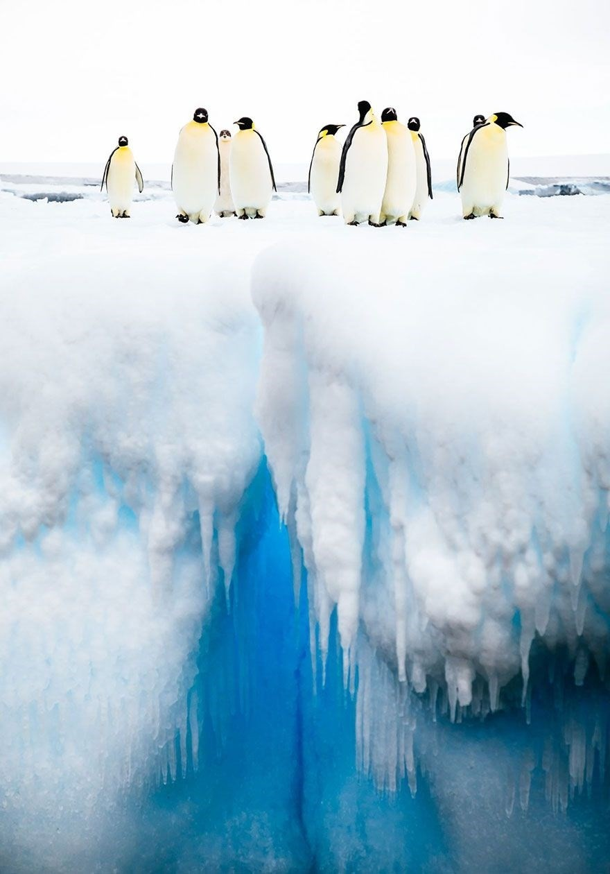 Mind The Gap, Antarctica - Honorable Mention, Animals In Their Environment