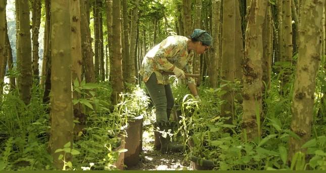 Nergiz Coşkun looks at some saplings.