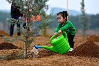 Turkey breaks world record for most saplings planted in 1 hour