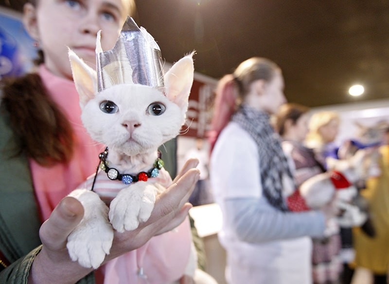 Pure purr-fection: Cats in Kiev compete in bizarre beauty pageant