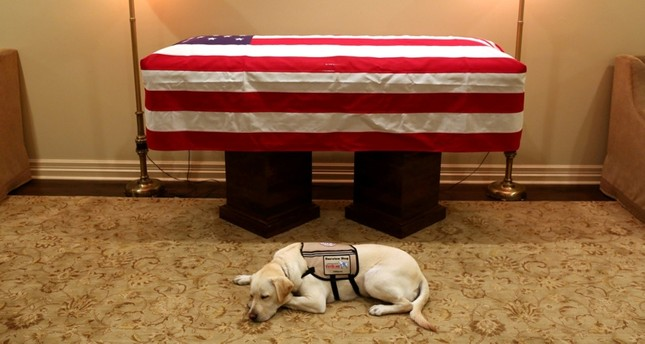 Sully, the service dog of former U.S. President George H.W. Bush in his final months, lays in front of Bush's casket at the George H. Lewis & Sons funeral home in Houston, Texas, U.S., December 3, 2018. (Reuters Photo)