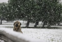 Long-awaited snowfall dusts Istanbul, Ankara