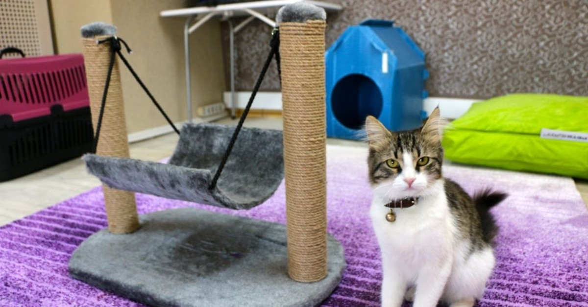 Cat hotel offers accommodation for pets whose owners have to go away.