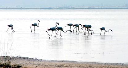 محبو تصوير الطيور يتوجهون إلى بحيرة أجي غول لإشباع هوايتهم