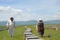 موسم جني العسل في تركيا