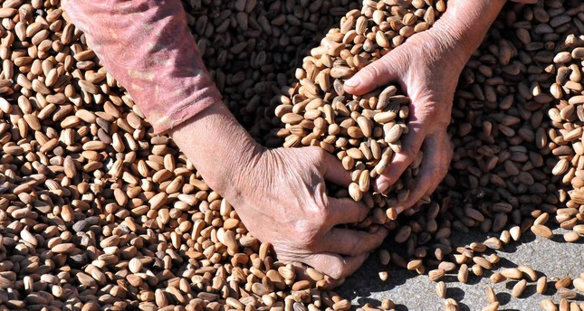 Per capita income of the 16 villages located in Kozak was $14,000 before global warming caused a severe reduction in the local pine nut production.