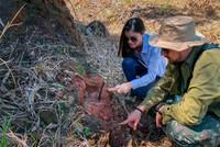 Desert-based dinosaur discovered in Brazil
