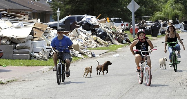 Dogs chase people riding their bicycles down a street lined with debris from flooded homes in the aftermath of Hurricane Harvey Wednesday, Sept. 6, 2017, in Houston. (AP Photo)