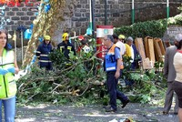 Thirteen people died and at least 50 were injured when an old growth oak tree collapsed on top of revelers during a religious festival on the Portuguese island of Madeira, local officials said...