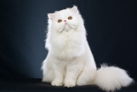 Science Says: DNA shows early spread of cats in human world