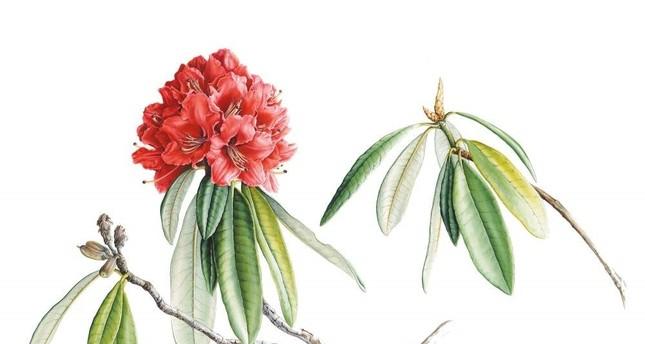 SALT Beyoğlu's Winter Garden program tells story of a plant painter