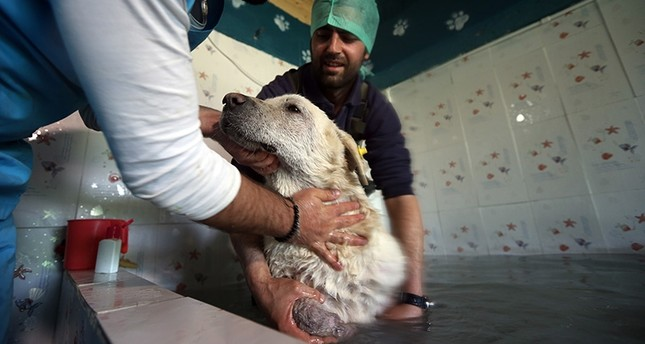 Injured strays heal in Istanbul's animal spa
