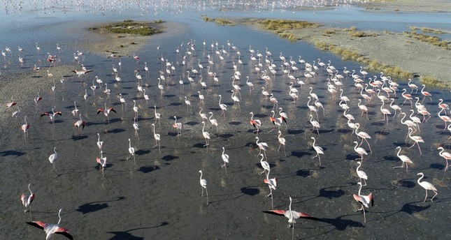 بحيرة توز وسط تركيا.. جنة الطيور البرية