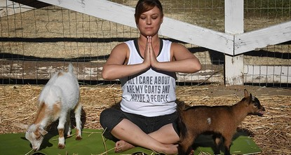 pAdonna Ebrahimi is stretched out on her yoga mat, struggling to maintain a cobra pose -- and her composure -- as a couple of baby goats do a balancing act on her back./p  pWelcome to Goat Yoga,...