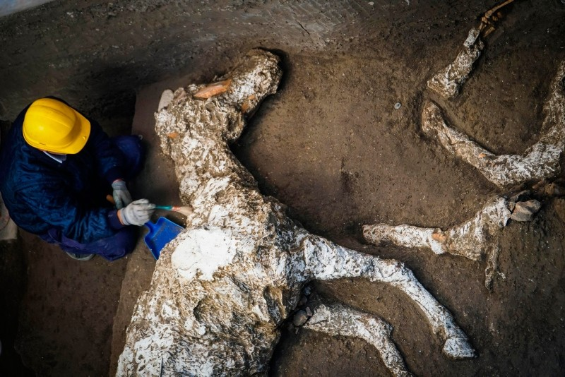 An archaeologist inspects the remains of a horse skeleton in the Pompeii archaeological site, Italy, Sunday, Dec. 23, 2018. (AP Photo)
