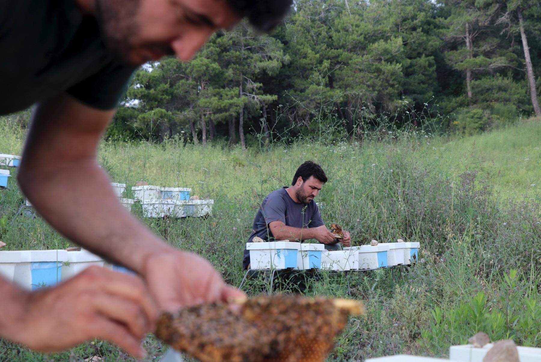 Beekeeper Turkmen have 3,000 hives in Hatay.