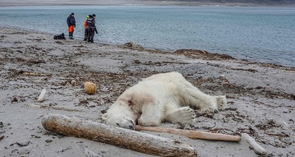 Polar bear shot dead after attacking cruise worker