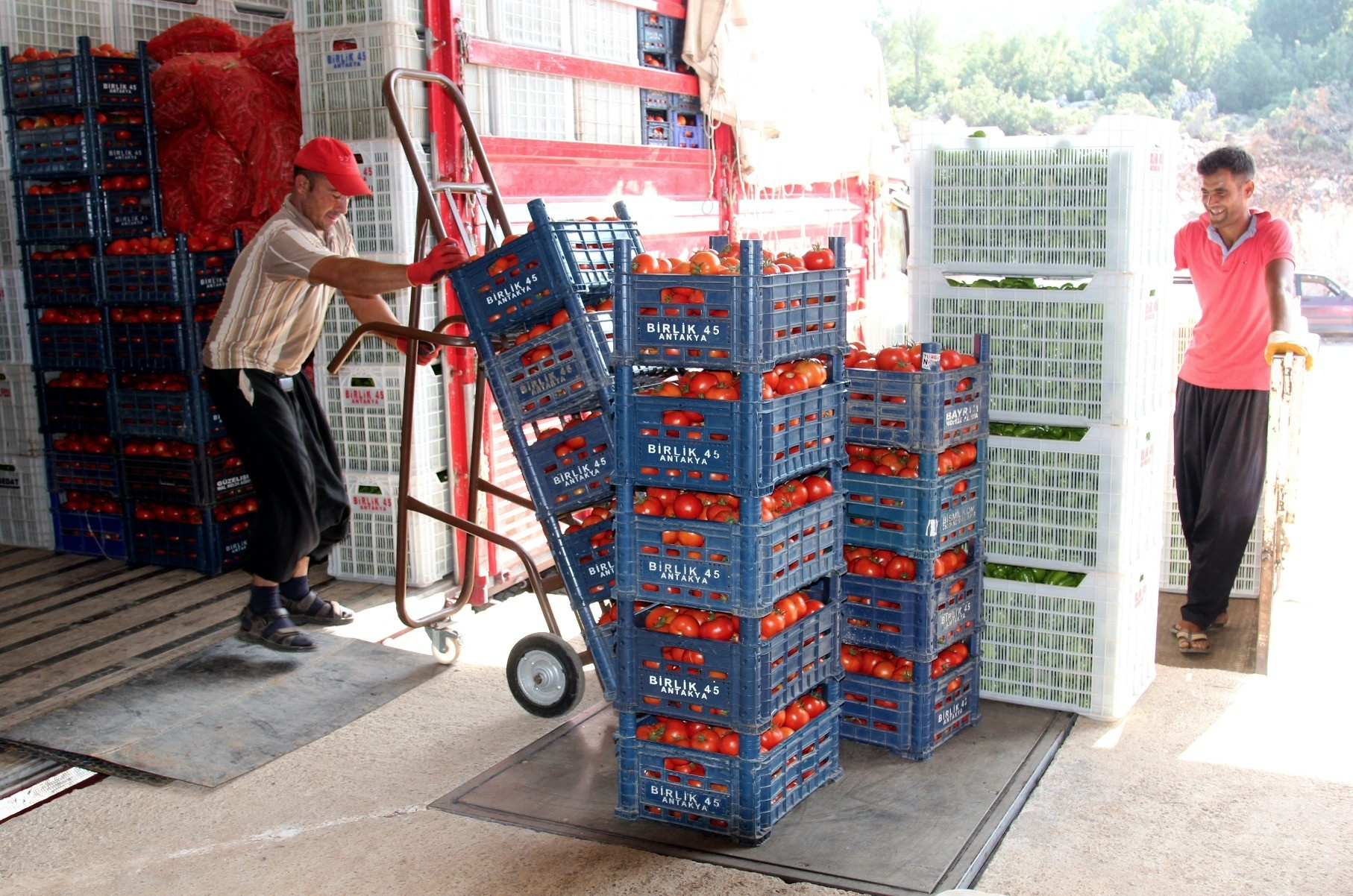 Turkey and Russia signed a memorandum of understanding that includes demands from both sides to resume tomato exports.