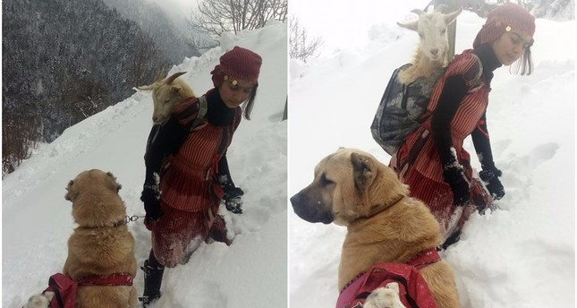 Girl carrying goat in her backpack goes viral for the cutest reason