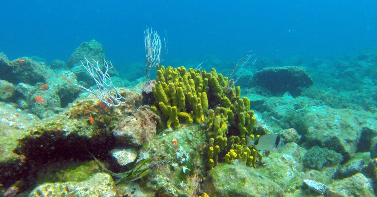 The Gulf of Saros mesmerizes divers with its rich marine life.