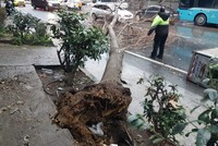 Strong winds, storms batter Istanbul