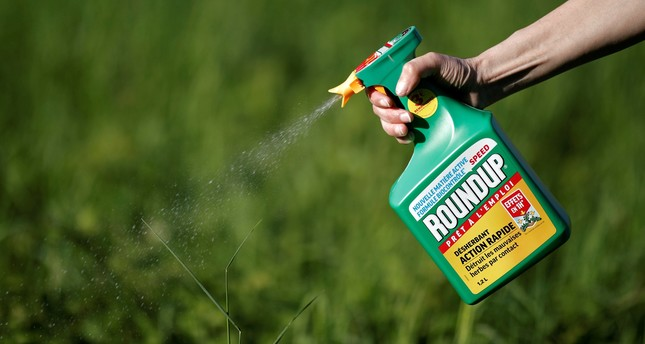 A woman uses a Monsanto's Roundup weedkiller spray without glyphosate in a garden in Ercuis near Paris. (REUTERS Photo)