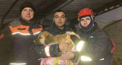 pIt is not known how it ended up in a 60-meter-deep borehole in Beykoz, Istanbul, but a Kangal (native Turkish guard dog) puppy made headlines for its plight. Soon after, offers of help to retrieve...