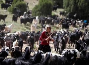 Последние кочевники Турции странствуют по Анатолии