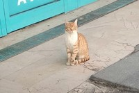 Stray cat bullies passersby in front of Istanbul supermarket