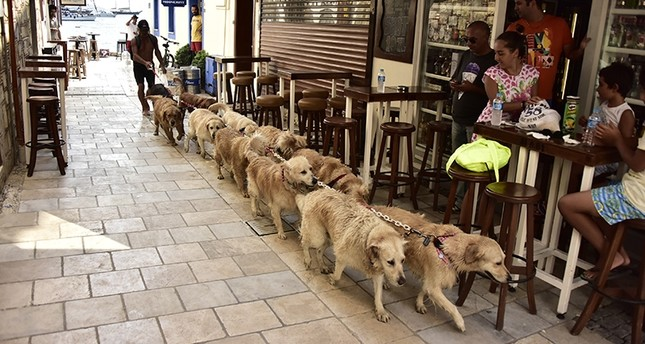 Meet 'the Golden Retriever Man of Bodrum' and his 'Golden Gang'