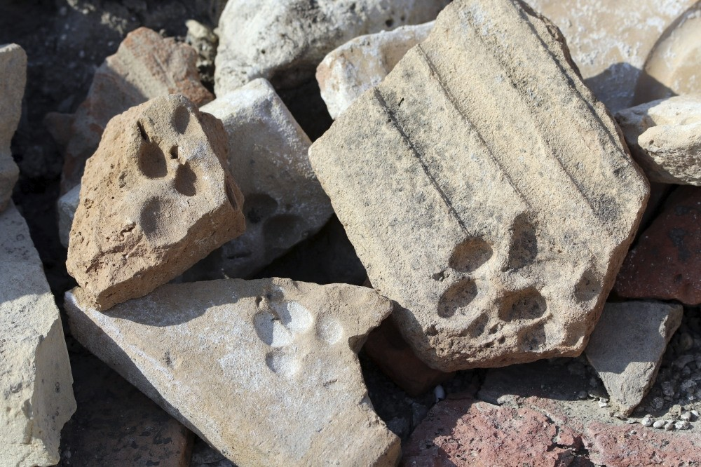 Cat and dog paw traces on brick and roof tiles that are nearly eight centuries old have been found at the Kadu0131kalesi archaeological site.