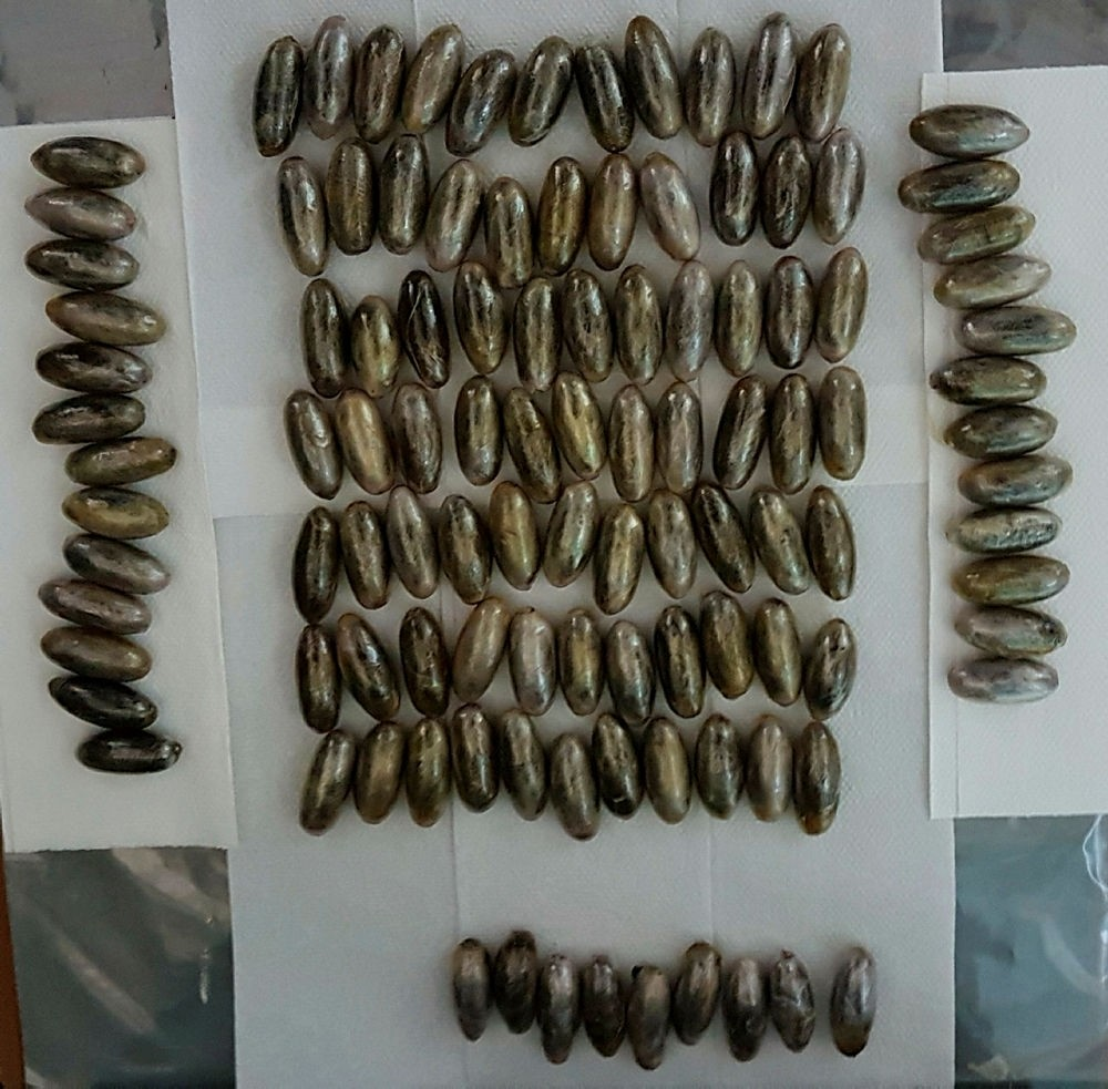 The photo made available by the Istanbul Police Department shows the capsules of cocaine found inside the Moroccan suspet's body on July 31, 2017.