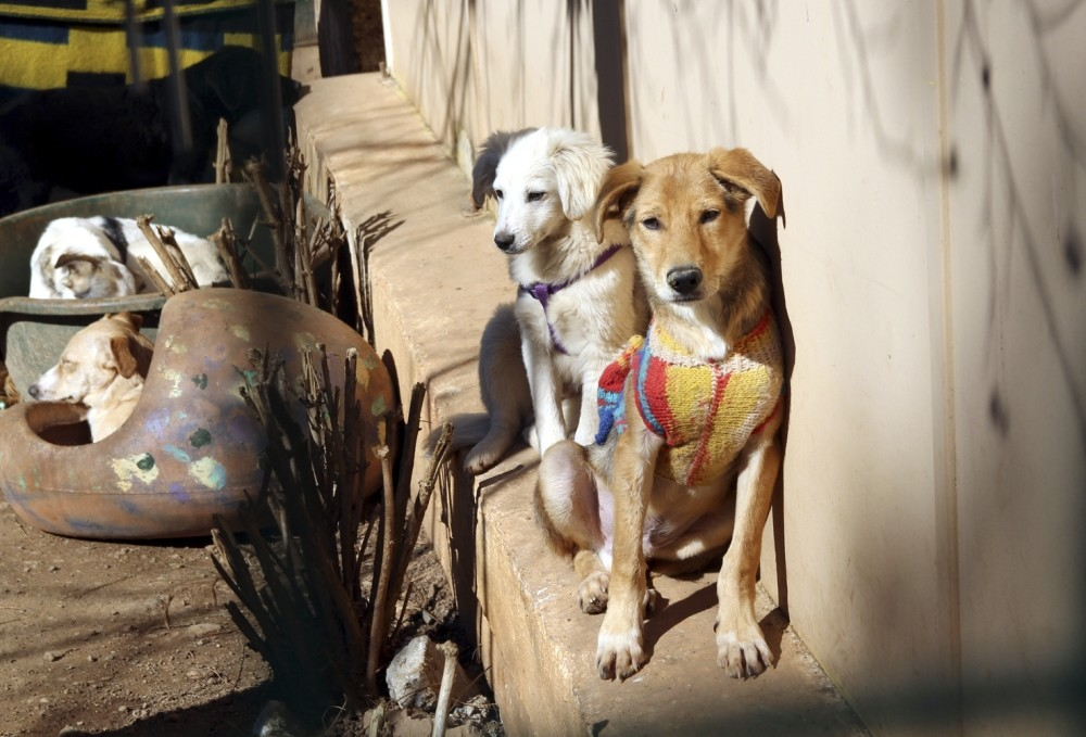 Some people stay in Marmaris for six months, purchasing dogs in the beginning of the vacation season, only to leave them behind when head go back home, causing an increase in the dog population.