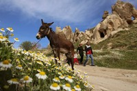 Spring in Cappadocia: Flowers bloom in fairyland