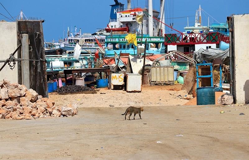 Ships are seen at the Bosaso port where head of Dubai government-owned P&O Ports' operations Paul Anthony Formosa was shot and killed, in Somalia's semi-autonomous region of Puntland, Somalia Feb. 4, 2019. (Reuters Photo)