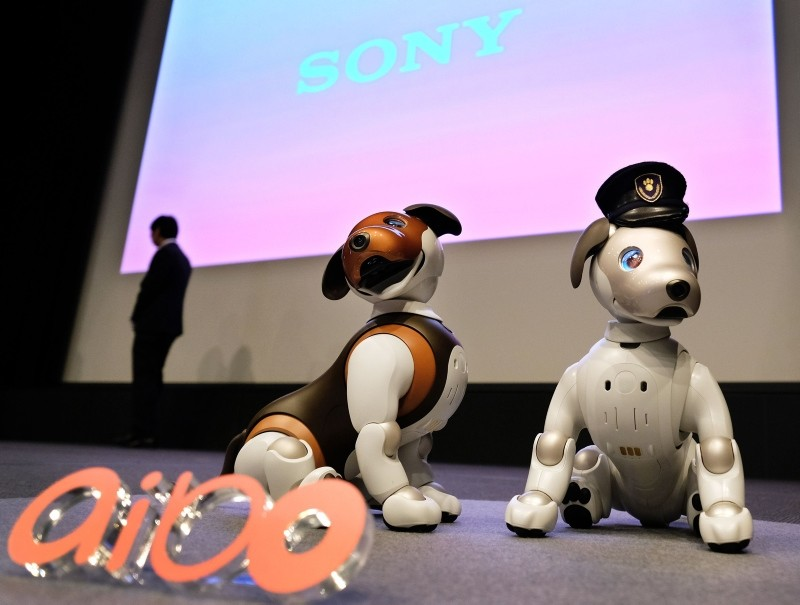 Versions of Sony's puppy-sized robot dog ,Aibo,, including a 2019 limited special colour model (L), are displayed during a press conference at the company's headquarters in Tokyo on January 23, 2019 (AFP Photo)