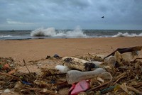 'I Am Not Plastic:' Marine life can be saved