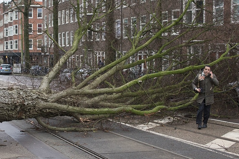 A man who escaped unharmed makes a phone call after his scooter was hit by a crashing tree uprooted by heavy winds in Amsterdam, Netherlands, Thursday, Jan. 18, 2018. (AP Photo)