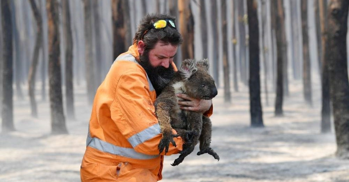 Adelaide wildlife rescuer Simon Adamczyk is seen with a koala rescued from a burning forest near Cape Borda on Kangaroo Island, southwest of Adelaide, Australia, Jan. 7, 2020. (AAP Image via REUTERS)