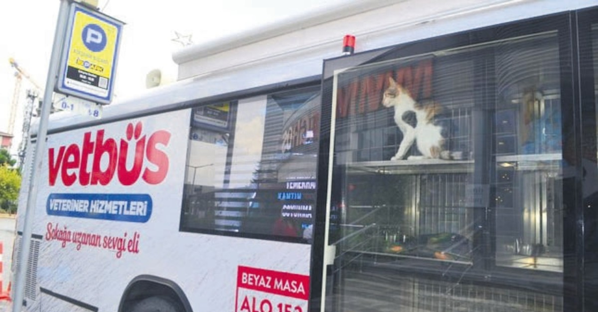 A cat staring out the window of Vetbus, a mobile veterinarian clinic run by the Istanbul municipality. Municipalities take responsibility for sterilization and the care of stray animals.