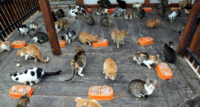 Leftovers turned into cat, dog food in Samsun