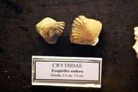460M-year-old fossil among shells donated to Bodrum museum