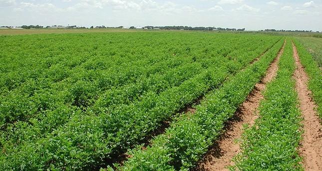 جانب من الزراعة في ولاية سنار السودانية