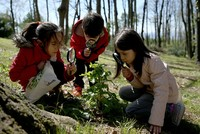 16,000 children become 'forest explorers' through Turkish program