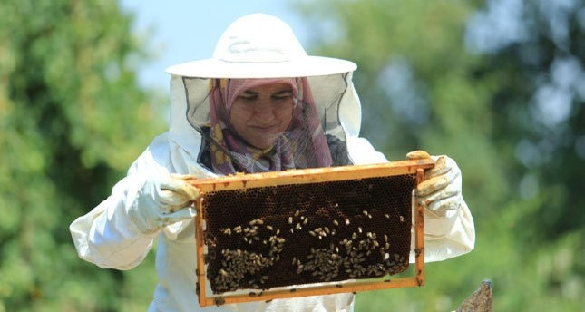 Beekeeping a source of income for Tekirdağ women