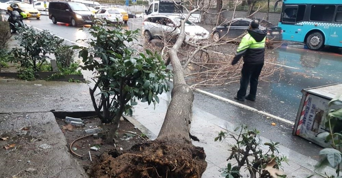 Strong winds knock down a tree in ?i?li, Istanbul, Dec. 30, 2019. (DHA Photo)